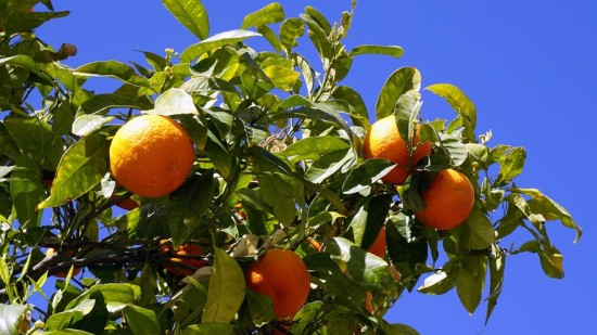 Coorg Oranges, Amanvana Spa Resort, activities in Coorg