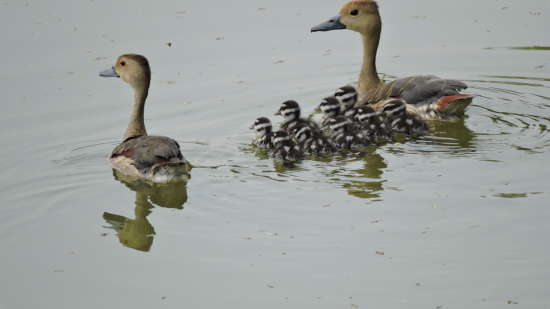 Sukhna Lake, Hometel Chandigarh, places to visit in Chandigarh