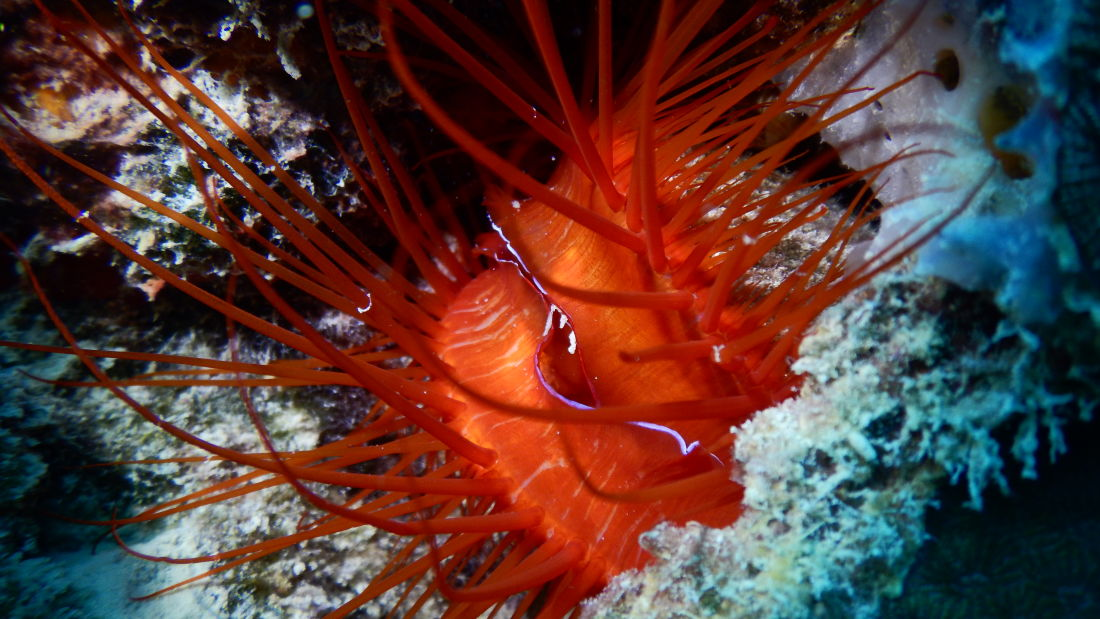 Electric Clam Photo by Avi Singh