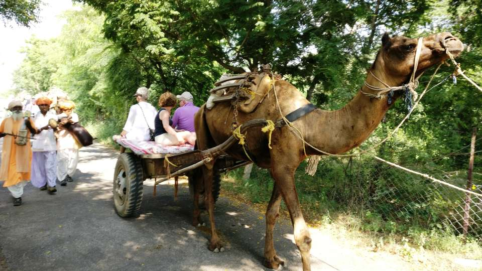 Umaid Lake Palace Dausa  ULP - Welcome by Camel Carts on Arrival 2
