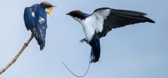 early bird offer amanvaana resort luxury resort in coorg