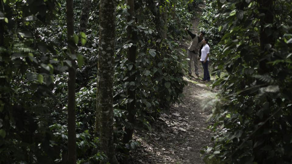 Coffee Plantation Walk, The Serai Chikmagalur, Luxury Resorts in Chikmagalur