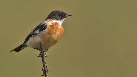Birds at Jim Corbett National Park