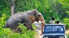 Recreation at the golden tusk ramnagar, Activities in Ramnagar 9