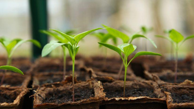 seedling-5009286 1920