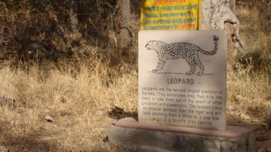 Sariska Wildlife Sanctuary near Tijara Fort Palace, Hotels in Alwar 1