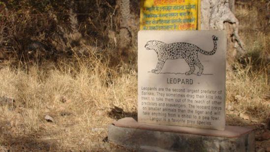 Sariska Wildlife Sanctuary _Tijara Fort Palace_Places To Visit In Rajasthan 1