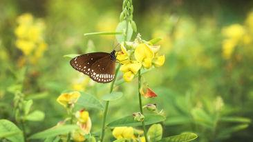 abad-turtle-garden-butterfly, Contact Beach Resort in Marari, Beach resorts in Allepey, 4 Star Resorts in Alleppey, Best Beach Resorts in Alleppey, Best Beach Resorts Near Cochin, Beach Resorts in Kerala