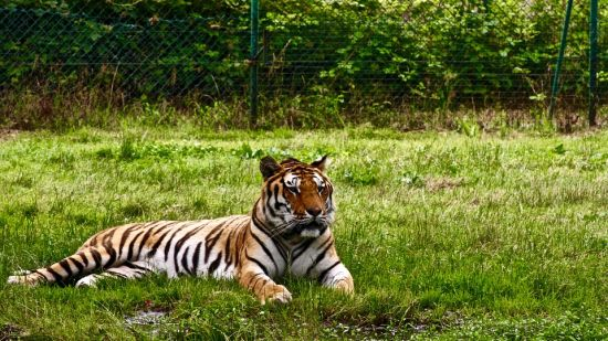 Best Places to Visit in Jim Corbett