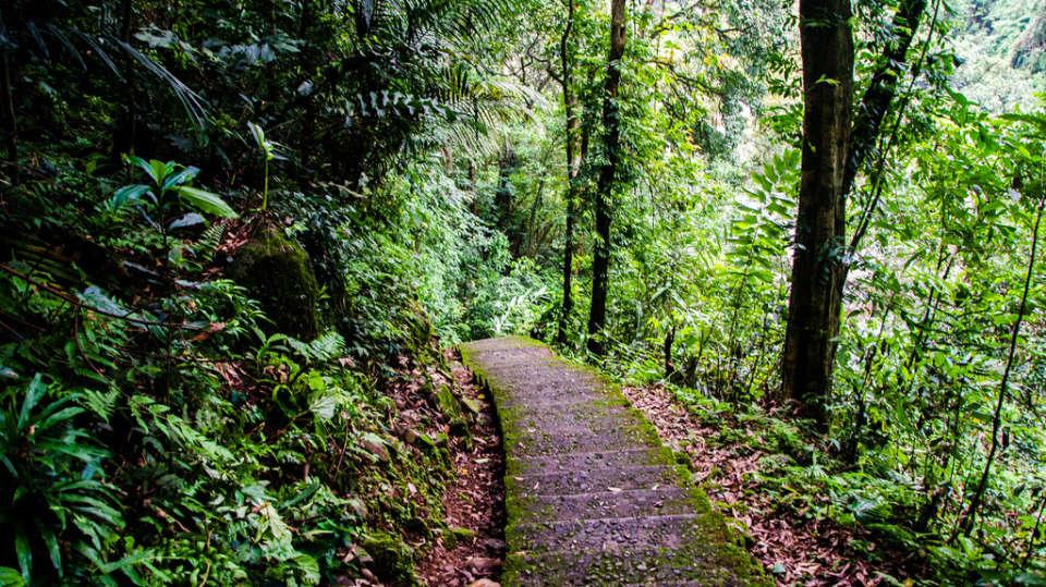 Polo Orchid Resort, Cherrapunji Cherrapunji Rain Forest Polo Orchid Resort Cherrapunji