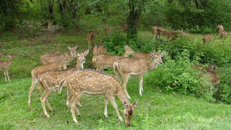Sariska National Park - Umaid Lake Palace Hotel Kalakho Dausa Rajasthan