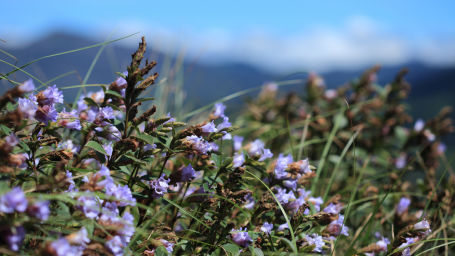 Neelakurinji Summit hotels resorts