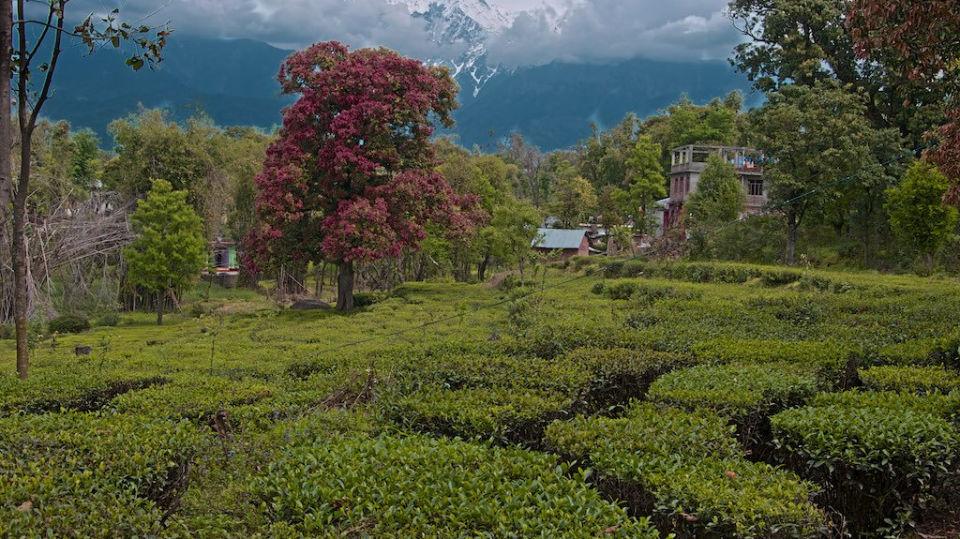 Bindla Tea Estate, RS Sarovar, Palampur Hotels