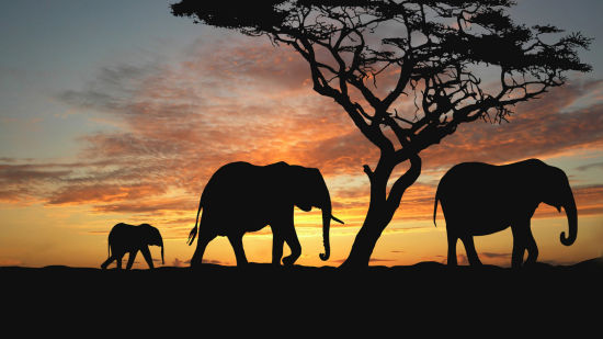 Le ROI Hotels & Resorts  Elephants Le Roi Corbett Resort