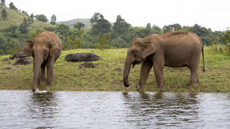 elephant junction thekkady neeramaya retreats hotel in thekkady