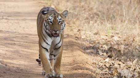 Periyar Tiger Reserve Summit Hampton Hotel Thekkady