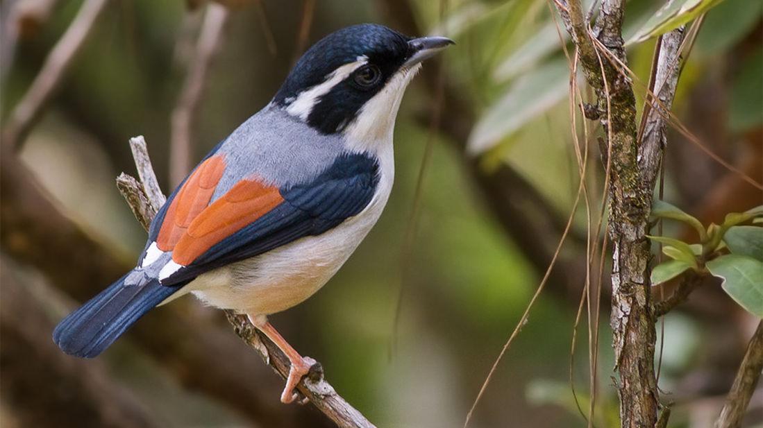 Bird watching at kyari kham near Corbett wild iris spa and resort 1