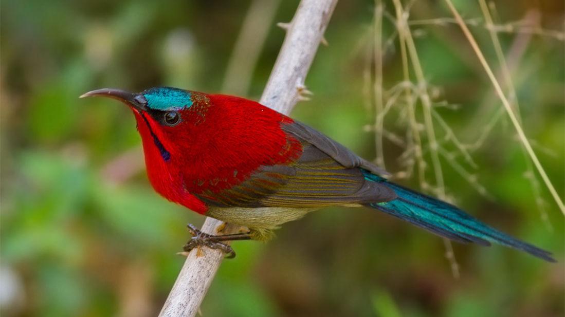 Bird watching at kyari kham near Corbett wild iris spa and resort 2