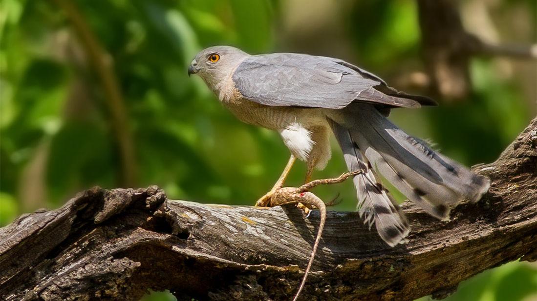 Bird watching at kyari kham near Corbett wild iris spa and resort