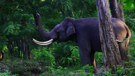 kerala wildlife sarovar hotels and resorts
