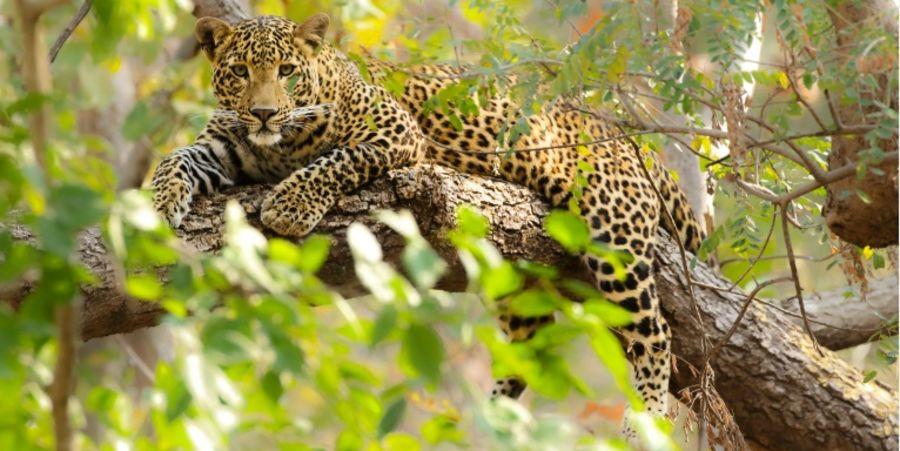 alt-text Satpura National Park Resorts, Satpura Resort, Jungle resorts in Madhya Pradesh, Forest resorts in Madhya Pradesh,  Wildlife resorts in Madhya Pradesh
