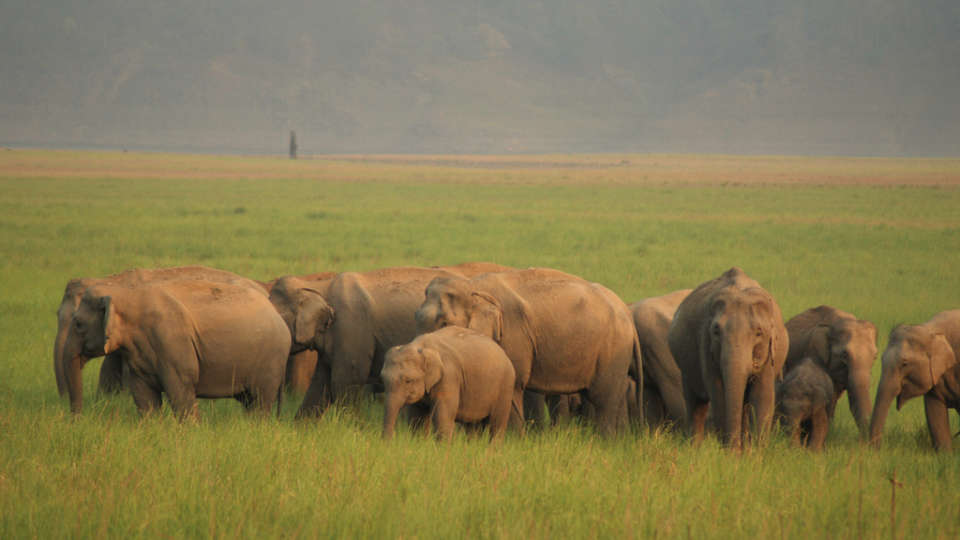 Elephants at Jim Corbett National Park