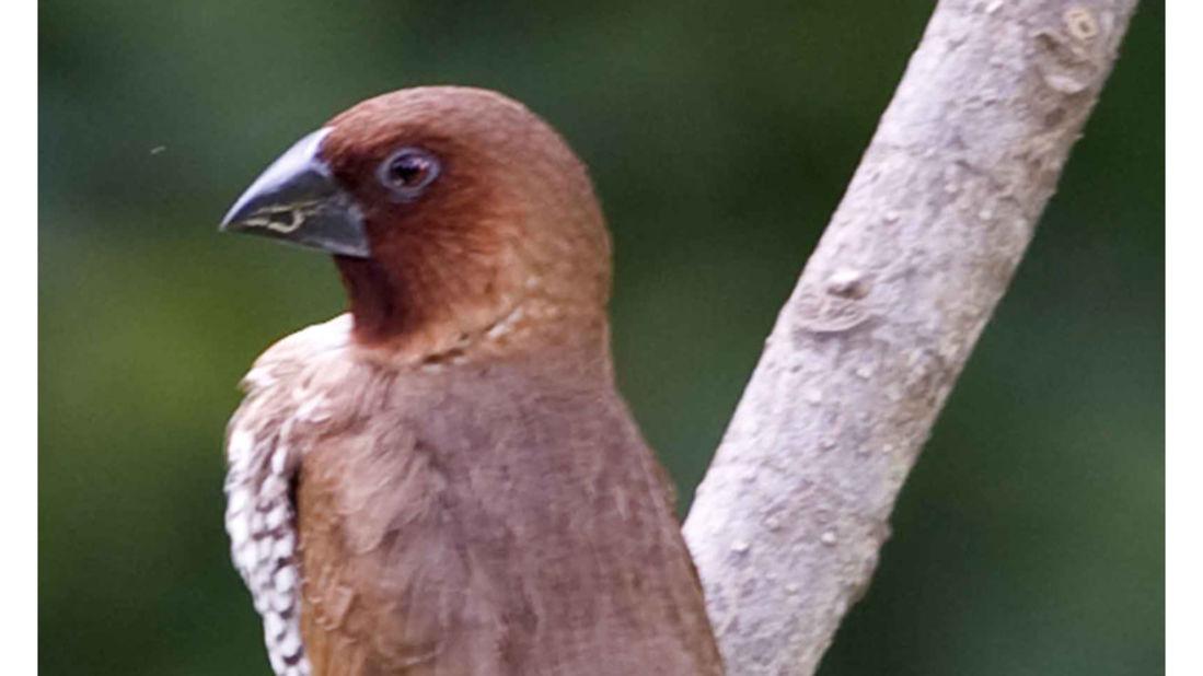birds Shaheen Bagh Resort Best resorts in dehradun 35