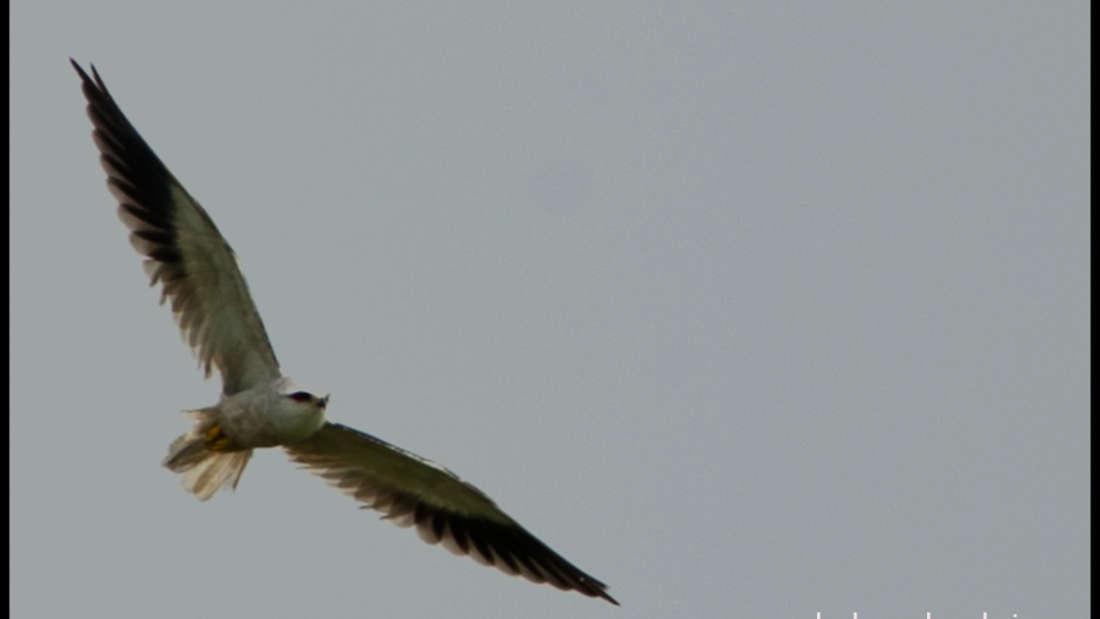 birds Shaheen Bagh Resort Best resorts in dehradun 4