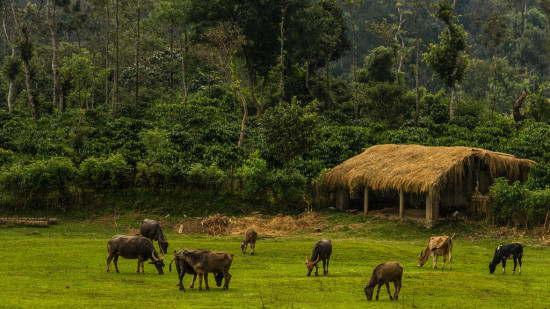 Agriculture in Coorg, Amanvana Resort and Spa, Luxury Resort in Coorg 1