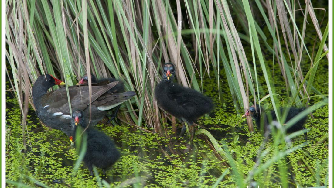 birds Shaheen Bagh Resort Best resorts in dehradun 9