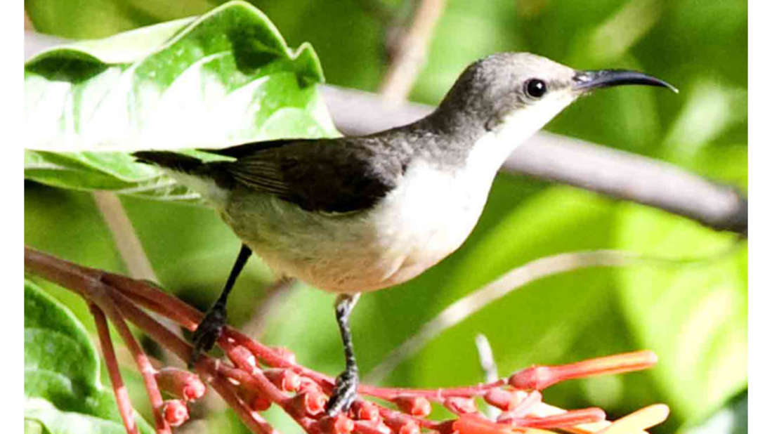 birds Shaheen Bagh Resort Best resorts in dehradun 31