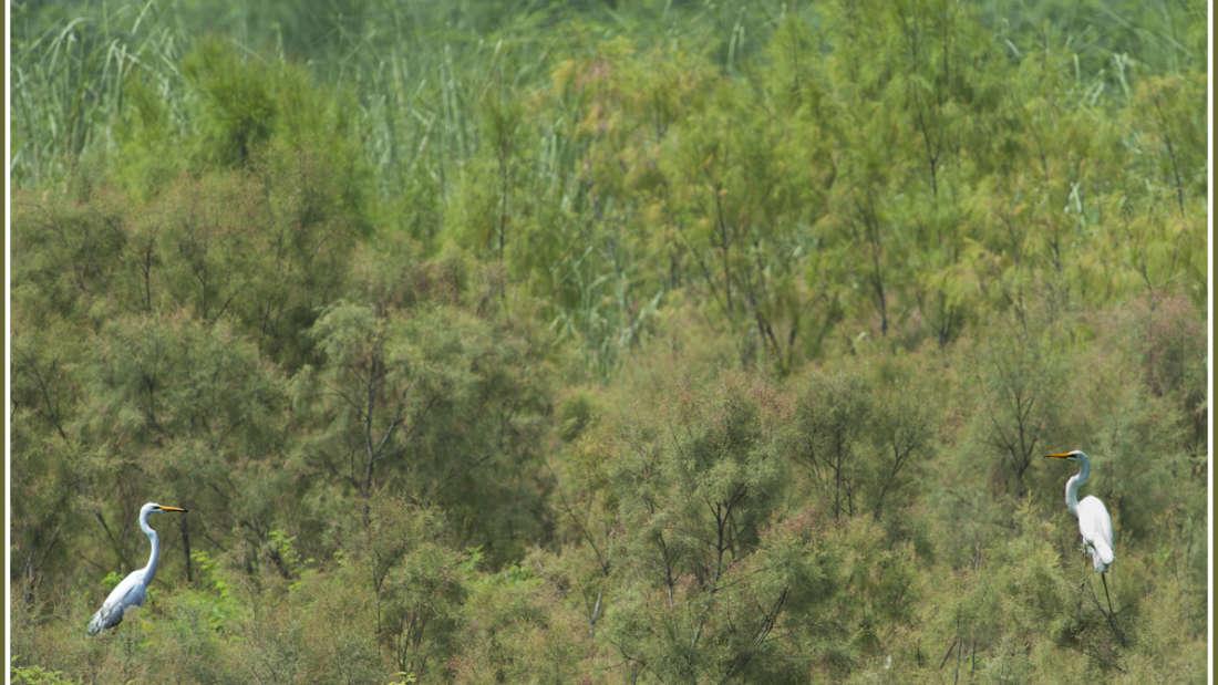 birds Shaheen Bagh Resort Best resorts in dehradun 11