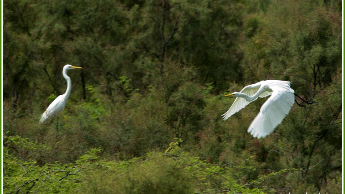 birds Shaheen Bagh Resort Best resorts in dehradun 12
