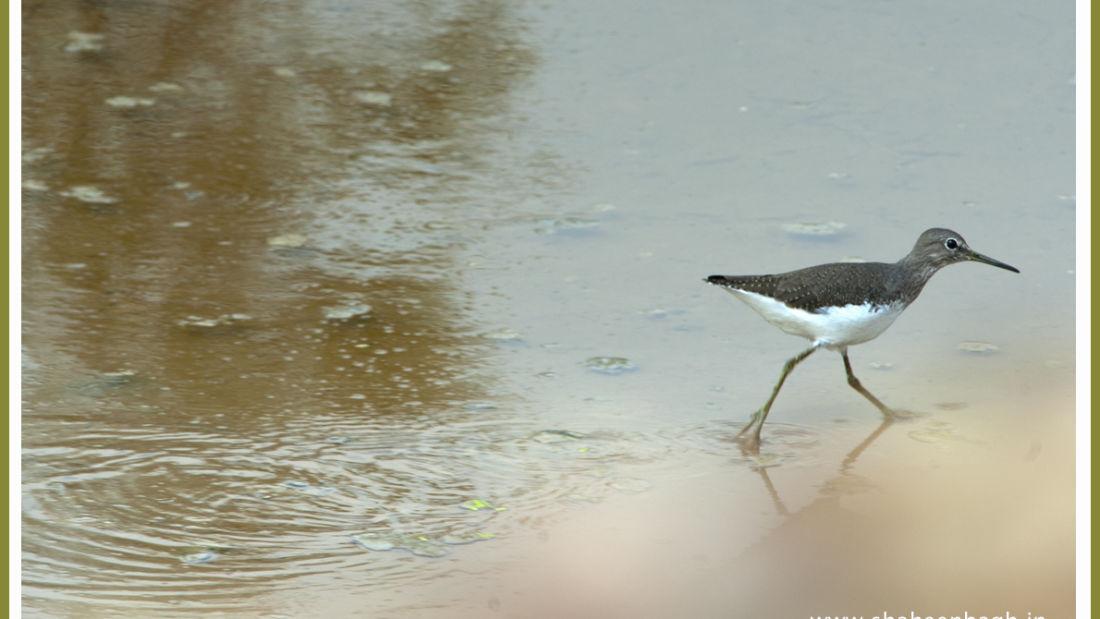 birds Shaheen Bagh Resort Best resorts in dehradun 13