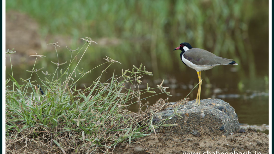birds Shaheen Bagh Resort Best resorts in dehradun 6
