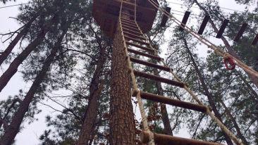 Go-Ape-Ladder