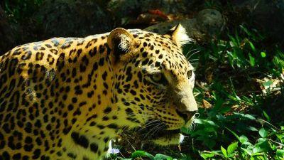 Thiruvananthapuram Zoo Classic Sarovar Portico Thiruvananthapuram
