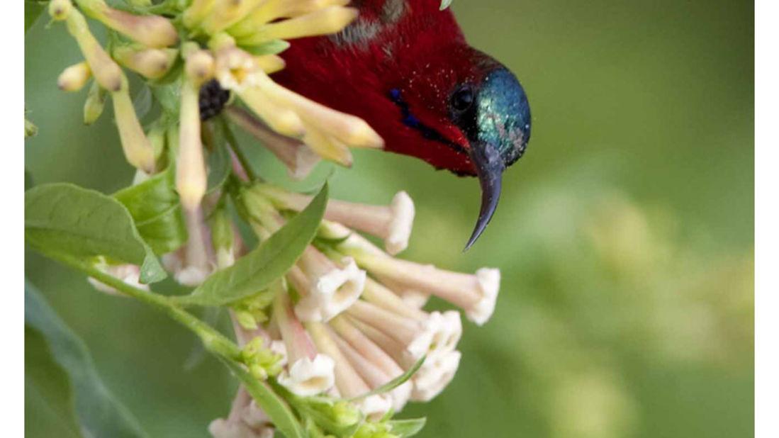 birds Shaheen Bagh Resort Best resorts in dehradun 25