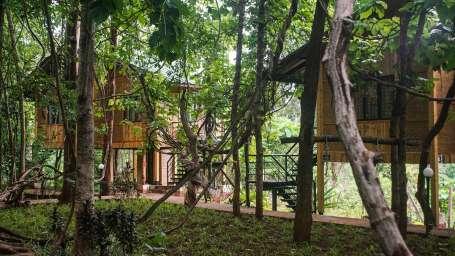 Tree Top Room - Sajan