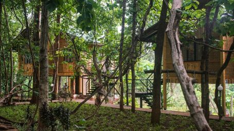Tree Top AC Room - Sajan