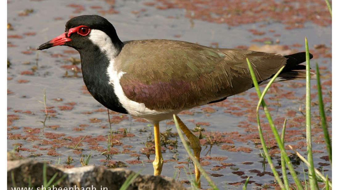 birds Shaheen Bagh Resort Best resorts in dehradun 15