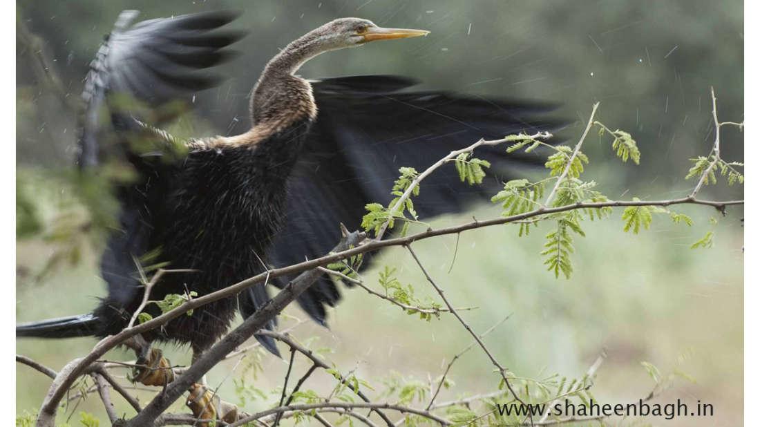 birds Shaheen Bagh Resort Best resorts in dehradun 37