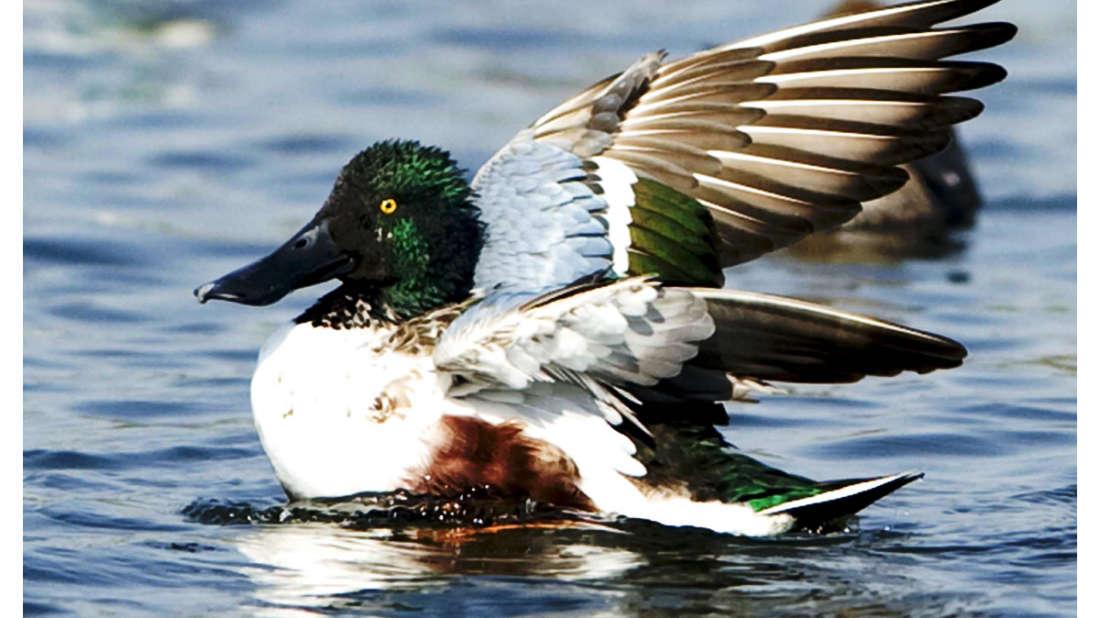 birds Shaheen Bagh Resort Best resorts in dehradun 38
