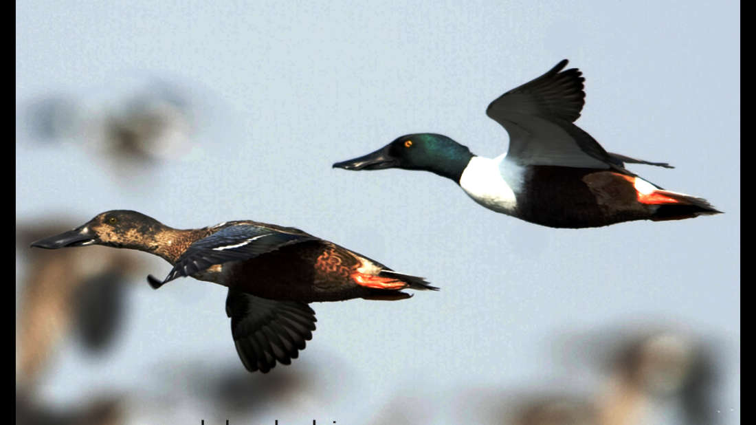 birds Shaheen Bagh Resort Best resorts in dehradun 39