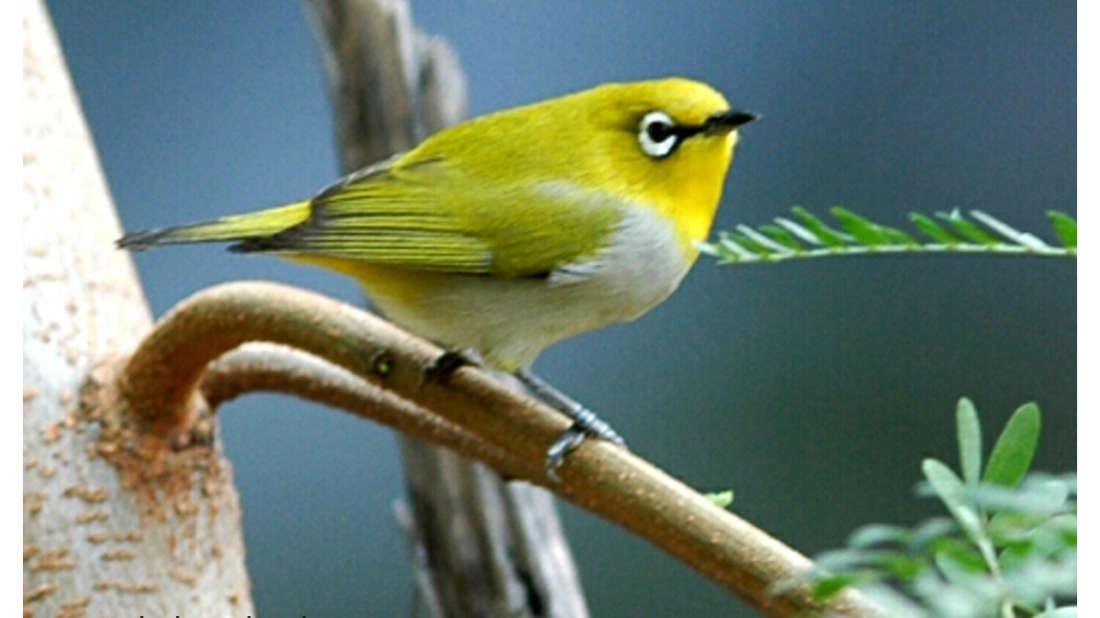 birds Shaheen Bagh Resort Best resorts in dehradun 40