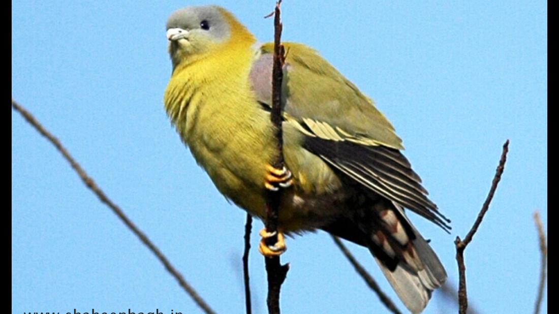 birds Shaheen Bagh Resort Best resorts in dehradun 41