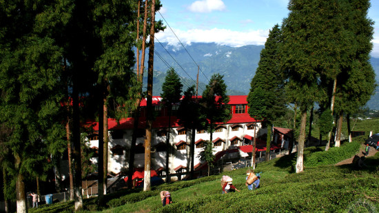 Happy Valley Tea Estate Darjeeling