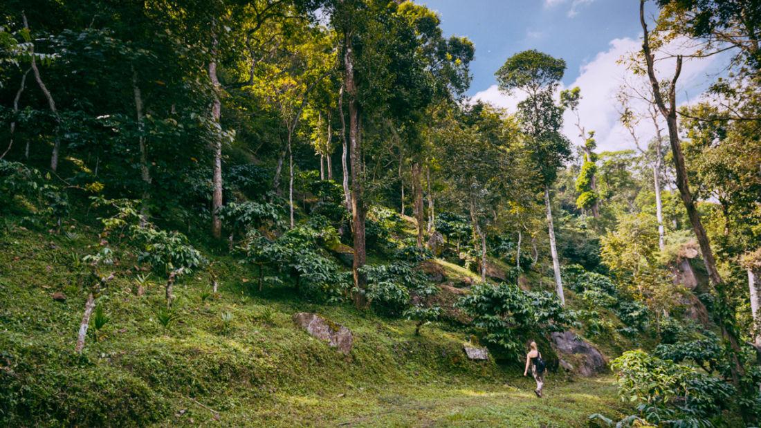 Tranquil Resort, Wayanad Wayanad tranquil resort wayanad walks trek