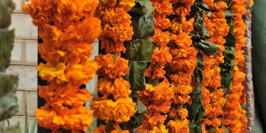 alt-text pre-wedding photoshoots in Bharatpur