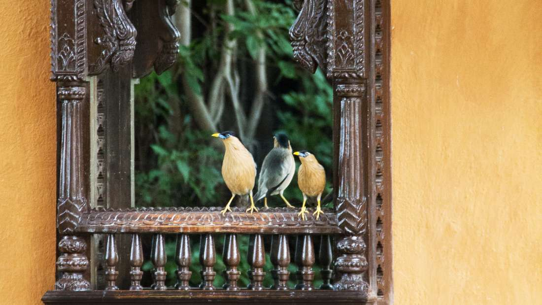 Bird Watching at Fort Jadhavgadh Heritage Resort Hotel Pune